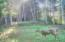 TL 1401 E Alsea Hwy, Tidewater, OR 97390 - Deer