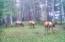 TL 1401 E Alsea Hwy, Tidewater, OR 97390 - Elk Herd