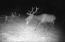TL 1401 E Alsea Hwy, Tidewater, OR 97390 - Bull Elk