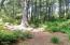 2802 NW Pacific Coast Hwy, Waldport, OR 97394 - Big Trees