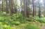 2802 NW Pacific Coast Hwy, Waldport, OR 97394 - Lots of trees
