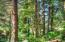 LOT 2800 Waldport Heights Dr, Waldport, OR 97394 - Forested Acreage