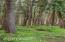 571 Fairway Dr, Gleneden Beach, OR 97388 - Trail