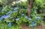 14536 S Coast Hwy, South Beach, OR 97366 - Beautiful shrubs