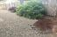4410 SE Heron Loop, Lincoln City, OR 97367 - Easy Care Front Yard