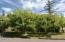 7211 Yaquina Bay Rd, Newport, OR 97365 - Fruit Trees