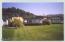 885 Ocean View Dr, Yachats, OR 97498 - 8 Monterey Cypress tree in yard