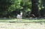 258 Neal Loop, Toledo, OR 97391 - Goat Party!