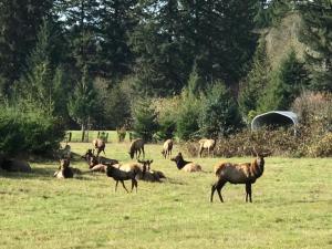LOT #6 Bentley Ct, Siletz, OR 97380 - Elk on the Property