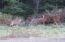 551 SE Keel Ave, Lincoln City, OR 97367 - Resident Deer