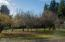 10756 Siletz Highway, Siletz, OR 97380 - Orchard