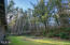 5555 Hwy 101, Otis, OR 97368 - Trees in yard