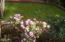 370 NE Williams Ave, Depoe Bay, OR 97341 - Flowers at back yard