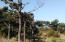 3410 NW Hidden Lake Dr, Waldport, OR 97394 - View throughtrees