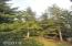 1905 NW Pine Crest Way, Waldport, OR 97394 - Amazing Trees