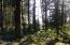 1905 NW Pine Crest Way, Waldport, OR 97394 - beautiful trail
