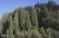 3329 E Five Rivers Rd, Tidewater, OR 97390 - Timber