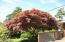 5625 Palisades Dr, Lincoln City, OR 97367 - Japanese Maple