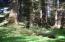 10720 Tillicum Loop, Neskowin, OR 97149 - Old Growth Trees