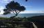 17 Ocean Crest Rd, Gleneden Beach, OR 97388 - tree and ocean
