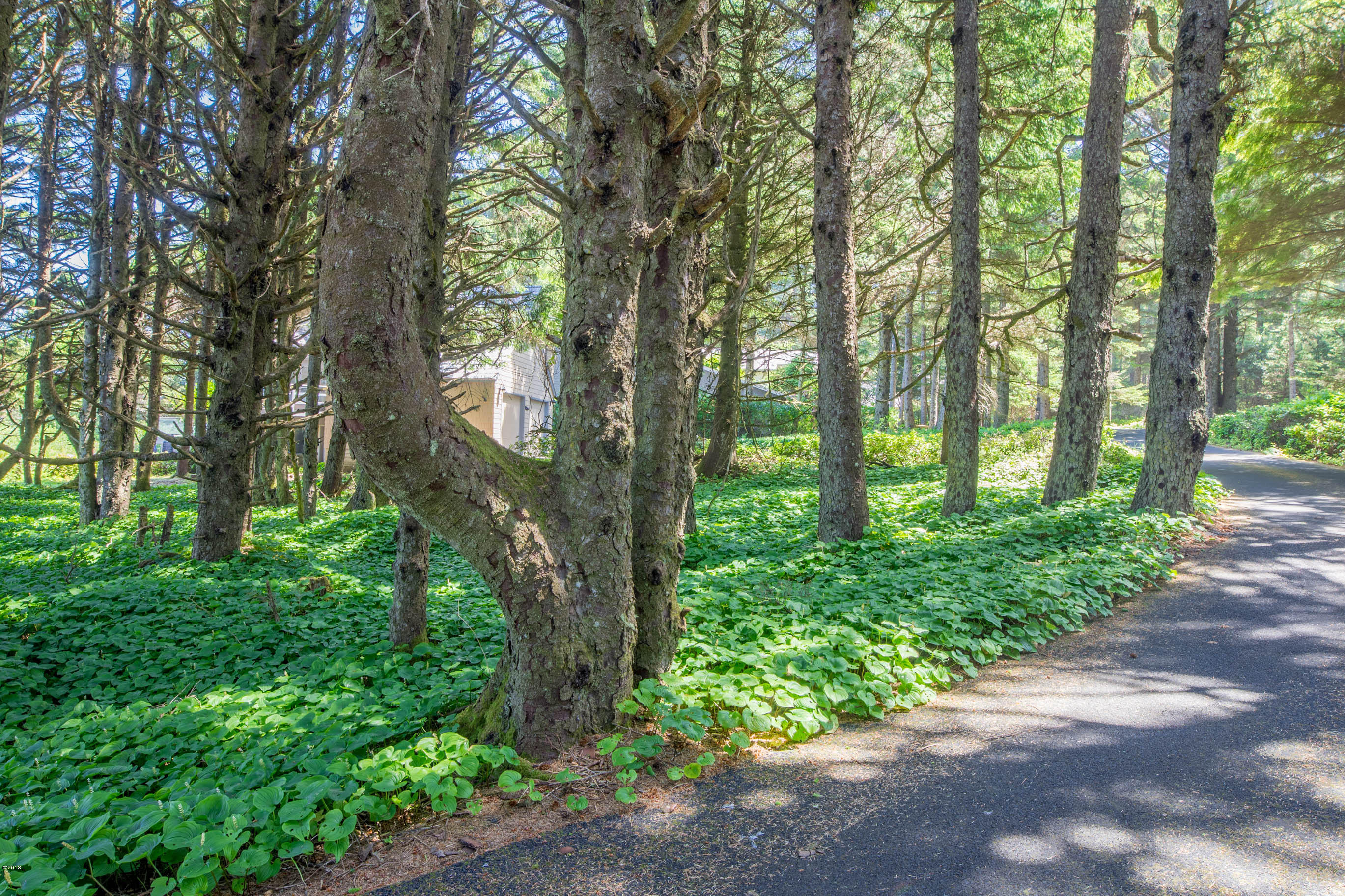 LOT 50 Cove Pt, Depoe Bay, OR 97341 - View from road