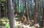 LOT 520 Ocean View Ln, Gleneden Beach, OR 97388 - Peaceful Forest setting