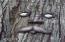 3700 NE Hwy 101  #46, Depoe Bay, OR 97341 - Tree Sprite  ;-)