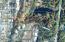 LOT 1 NW Lotus Lake Dr, Waldport, OR 97394 - Lot 1 Lotus Lake aerial