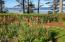 4925 NW Woody Way, Newport, OR 97365 - Garden