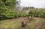 2175 NE Reef Ave, Lincoln City, OR 97367 - Backyard (1280x850)