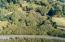 T/L 2100 Aeolian Way, Neskowin, OR 97149 - Alder Trees