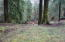 LOT 5 N. Doris Ln, Otis, OR 97368 - Lot view to creek