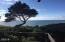 17 Ocean Crest Rd, Gleneden Beach, OR 97388 - Scenic tree