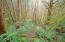 5275 Yaquina Bay Rd, Newport, OR 97365 - Fern Filled Forest
