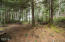 1905 NW Pine Crest Way, Waldport, OR 97394 - land in back yard