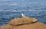 440 SW Pine Ct, Depoe Bay, OR 97341 - Neighbors