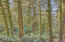 4358 NE East Devils Lake Rd, Otis, OR 97368 - Forest