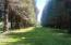 584 E Buck Creek Rd, Tidewater, OR 97390 - Lane way of trees