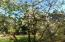 11668 SE Ash St, South Beach, OR 97366 - In bloom