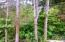 511 SE Inlet Ave, Lincoln City, OR 97367 - Backs up to the forest