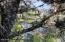 0 Kelsie Way, Florence, OR 97439 - IMG_0426