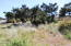 1318 NW Bayshore Dr., Waldport, OR 97394 - Nice Lot