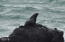 3768 Rocky Creek Ave, Depoe Bay, OR 97341 - Sea Lion on Rock