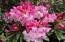 9466 Yachats River Rd, Yachats, OR 97498 - Rhodie in Bloom