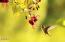 4616 S Beaver Creek Rd, Waldport, OR 97394 - hummingbird four 800