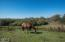 45900 Tibbets Rd, Neskowin, OR 97149 - Horse in pasture