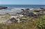 470 Yachats Ocean Rd, Yachats, OR 97498 - Tide Pool across the Road