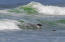 430 Whale Point Dr, Neskowin, OR 97149 - fb sea lion sept-149