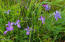 430 Whale Point Dr, Neskowin, OR 97149 - irises for sale-186