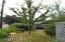 1303 N Nye St, Toledo, OR 97391 - Bing Cherry Tree